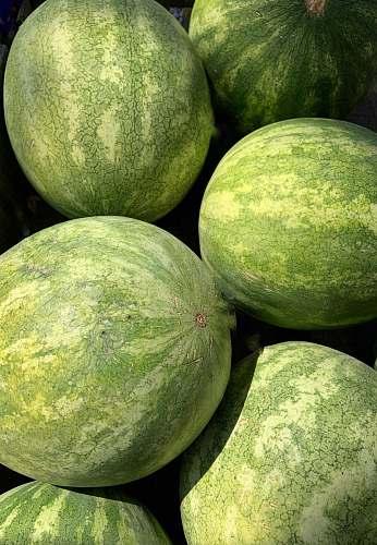 plant green fruit melon