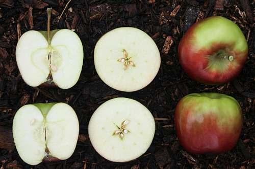 food sliced apple fruit on ground Apple