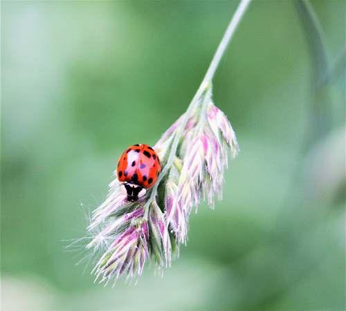 invertebrate ladybird on leaf plant