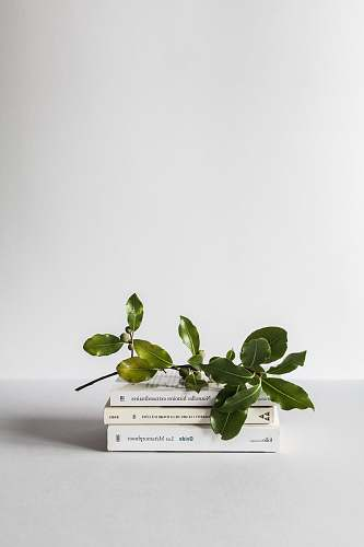 photo minimal green leafed plant plant free for commercial use images