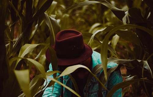 apparel man wearing fedora hat in corn field style