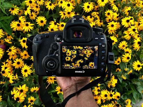 photo camera person holding Canon camera taking photos of yellow petaled flower plant free for commercial use images