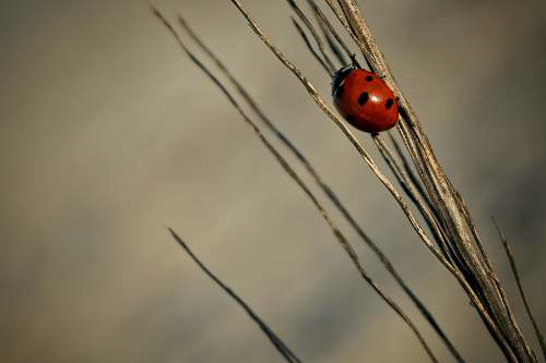 plant close-up photography of ladybird on grass grass