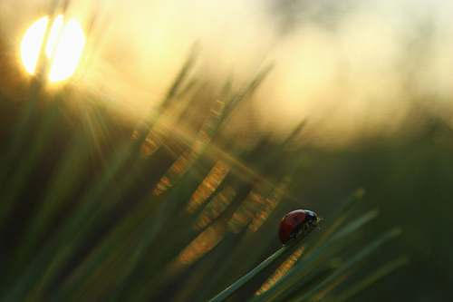 photo plant selective focus photography of ladybug on green grass during golden hour grass free for commercial use images