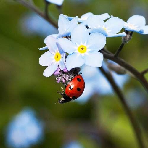 plant selective focus photograph of ladybug on white petaled flower plant blossom