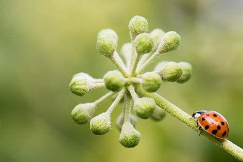 plant tilt-shift lens photography of bug on plant bud