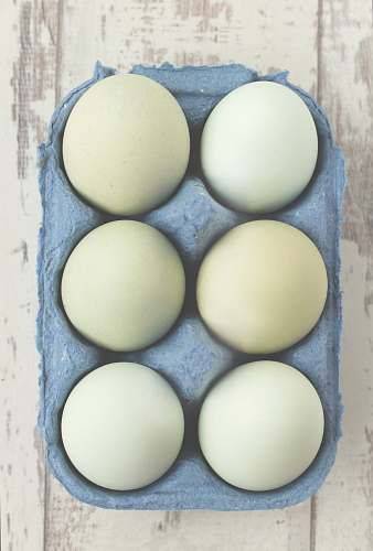 egg six white eggs placed on gray tray eggs