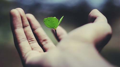 life floating green leaf plant on person's hand hand