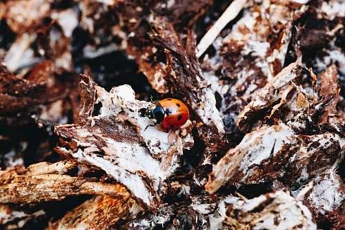 animal beetle on wood invertebrate