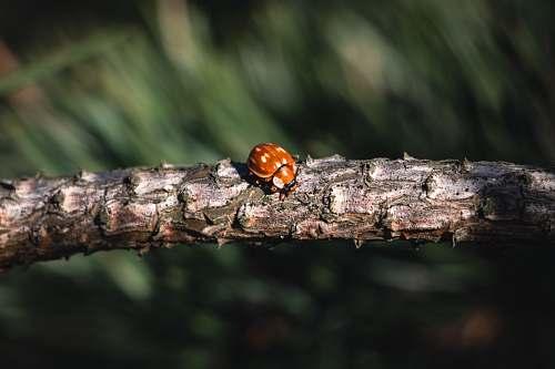 animal brown bu on tree branch invertebrate