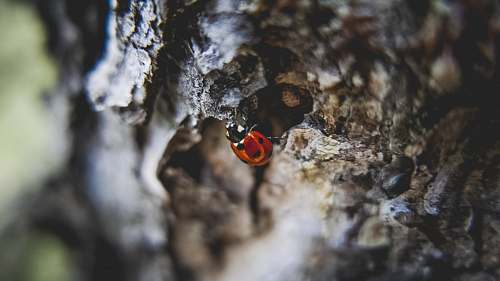 bark close-up photo of ladybug climbing tree at daytime tree
