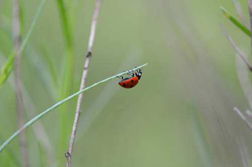 photo animal ladybug on green plant invertebrate free for commercial use images