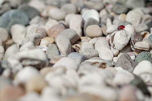 photo grey ladybug on stone pebble free for commercial use images