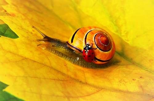 animal ladybug on yellow snail snail