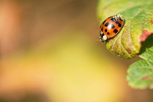 animal selective photography of Lady bug on leaf ant