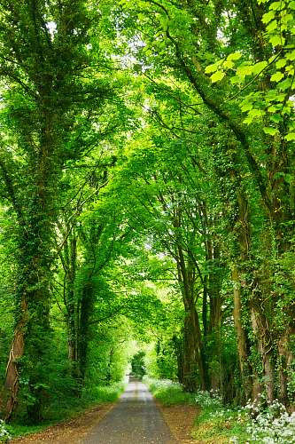 green gray concrete road top between green trees tree