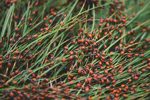 photo conifer green grass flora free for commercial use images