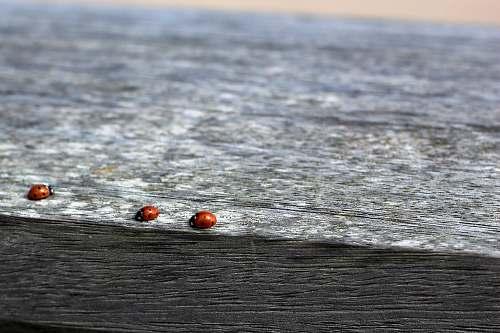 grey photo of three ladybug on black and gray surface fence