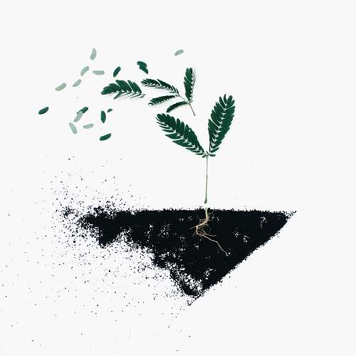 flora green leaf plants on black soil illustration leaf