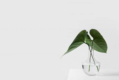 photo white green leafed plant on clear glass vase filled with water green free for commercial use images