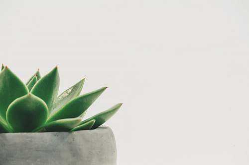 succulent green plant minimal