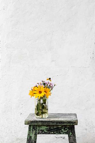photo flower sunflower with clear glass vase on gray table wall free for commercial use images