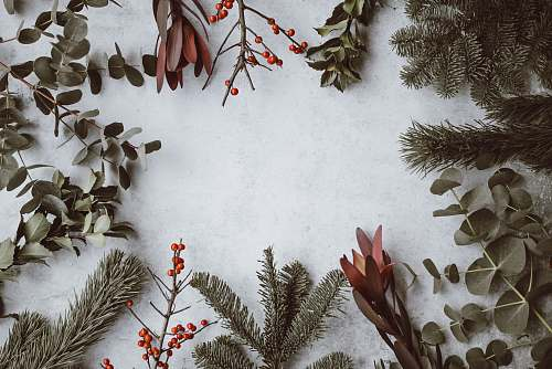 holiday assorted-type of leaves lying on white panel plant