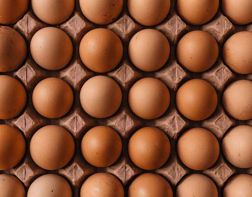 photo egg native egg lot uzuntarla mahallesi free for commercial use images