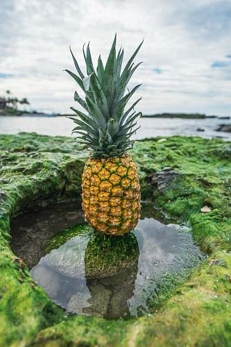 fruit yellow and green pineapple on green rock surrounded by water during daytime pineapple