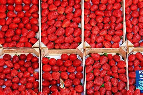 plant red strawberries strawberry