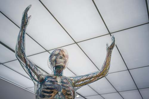 skin human body sculpture skeleton