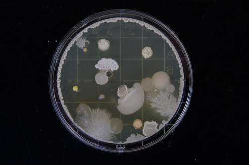 photo science scope image bacteria free for commercial use images