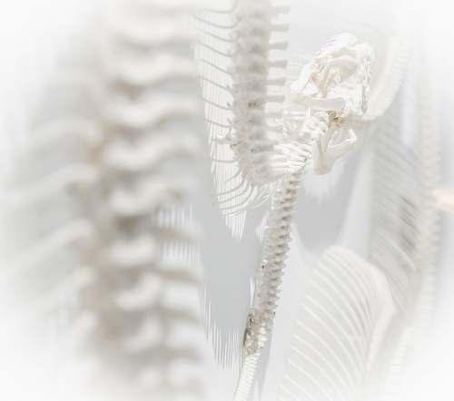 snake white skeleton system shadow