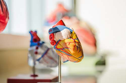 photo food selective focus photography of heart organ illustration confectionery free for commercial use images