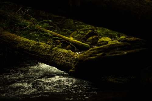 moss  vegetation