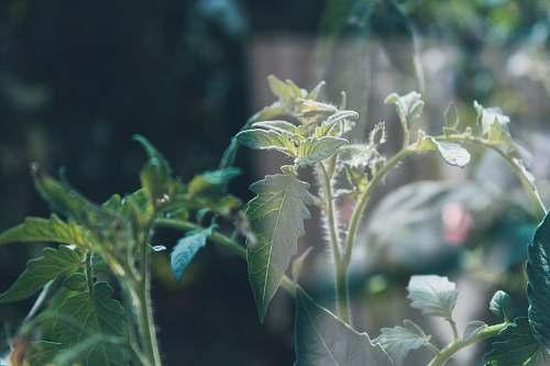 vegetation  bush