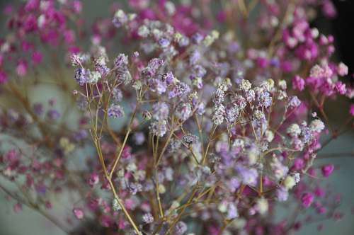 blossom pink and white petaled flower plant flower