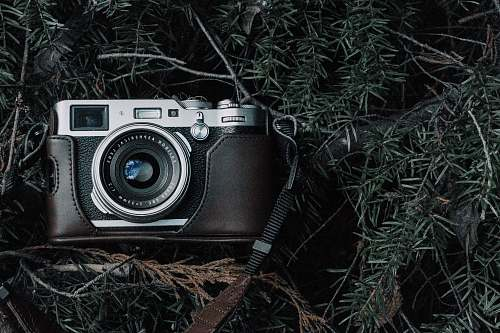 electronics black and gray film camera with black case on green pine tree leaves grey