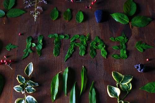 leaf leaves on table words