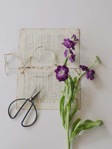 ephemera purple petaled flowers on printing paper beside shears purple