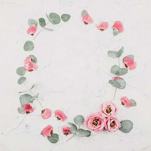 floral pink roses on white marble surface background