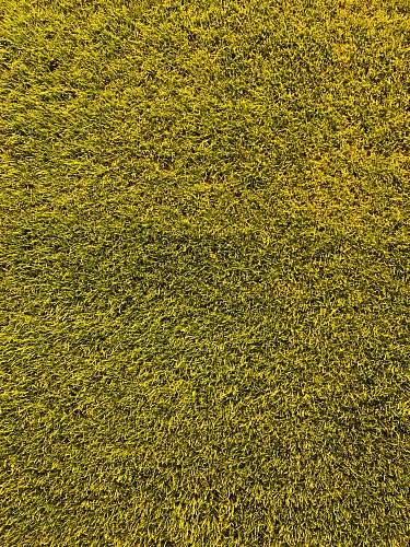 bayarena green grass field leverkusen