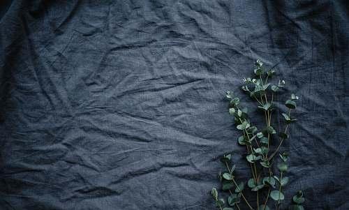grey green leafed plant flora