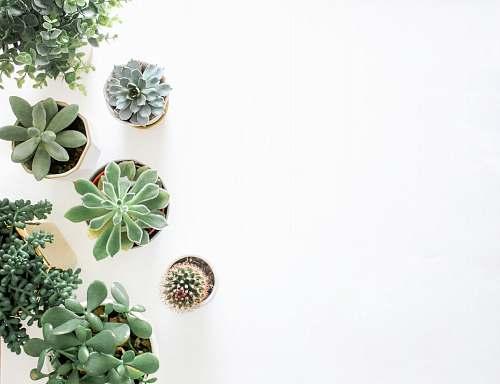 bead green succulent plant near plant accessories