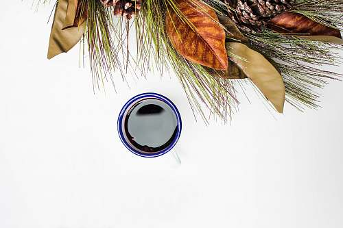 mulled wine blue and black container beside plants christmas