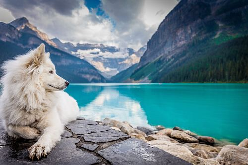 photo A white dog sitting on a rock formation near a large mountain pond. free for commercial use images