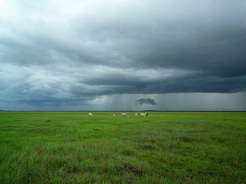 photo animals on green field under cloudy sky free for commercial use images