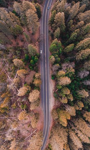 photo bird's eye view photo of road in the middle of forest free for commercial use images