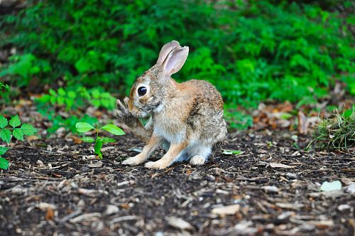 photo brown rabbit near green leafed plant free for commercial use images