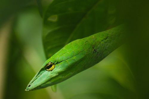 photo close-up photography of green snake free for commercial use images